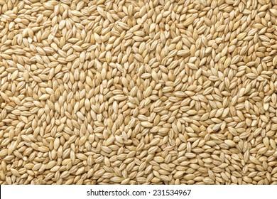 Two-row barley  with husks