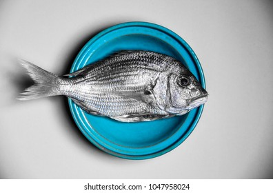 two-tone colored sea bream in a turquoise bowl