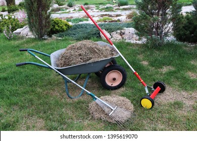 Two-wheeled wheelbarrow loaded with dethatched lawn grass, a roller moss removal rake and a lawn rake in the spring garden