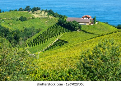 Txakoli vineyards with Cantabrian sea in the background, Getaria in Basque Country, Spain