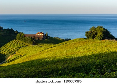 Txakoli white wine vineyards with the Cantabrian sea in the background, Getaria, Spain