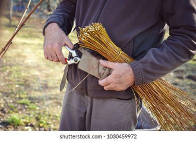 tying vines using ancient method