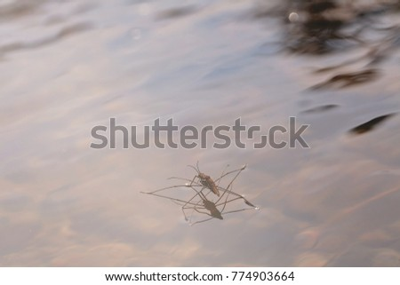 Types Bed Bugs Range On Water Stock Photo Edit Now 774903664