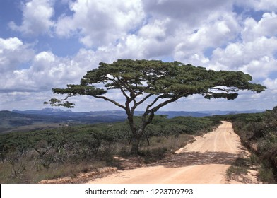 A typical African countryside road, with an umbrella thorn acacia tree at its side. The picture was taken in eastern Zimbabwe.