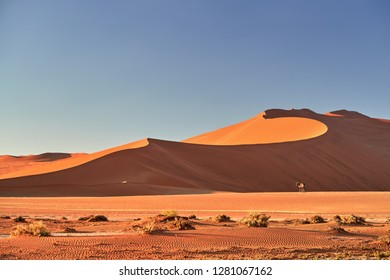 Typical african desert scenery. Namib desert landscape with wildlife,  South African Oryx, Oryx gazella staring at camera against huge red dunes and blue sky. Namib Naukluft National Park, Namibia.