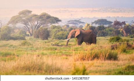 Typical african landscape at the foot of a volcano Kilimanjaro, Amboseli national park, Kenya. Savanna, acacia trees and huge african elephant. Wildlife photography in Kenya, Tanzania.