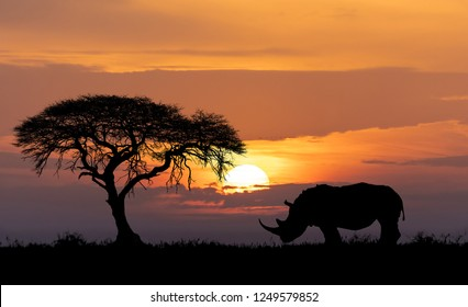 Typical african scenery, silhouette of large acacia tree in the savanna plains with rhino, rhinoceros, Africa wildlife and wilderness sunset concept
