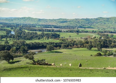 Typical Australian rural landscape -  sheep grazing on green grass field with river and  mountains in distance. Gundagai, NSW Australia.