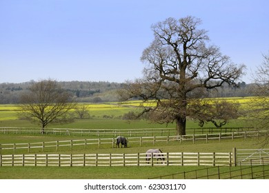typical beautiful lush green english cotswold landscape