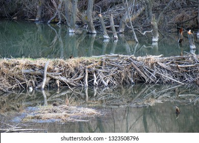 Typical beaver dam and swamp in central Europe, Slovakia. Beaver dams or beaver impoundments are dams built by beavers. Structures modify the natural environment.