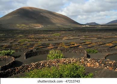 typical black vineyards on lava fields - La Geria, Lanzarotte, Spain, Europe