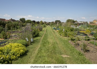A typical British allotment garden. The allotment, or a community garden is a plot of land where individuals can grow food or flowers for personal use. This shows the diversity of products growing.