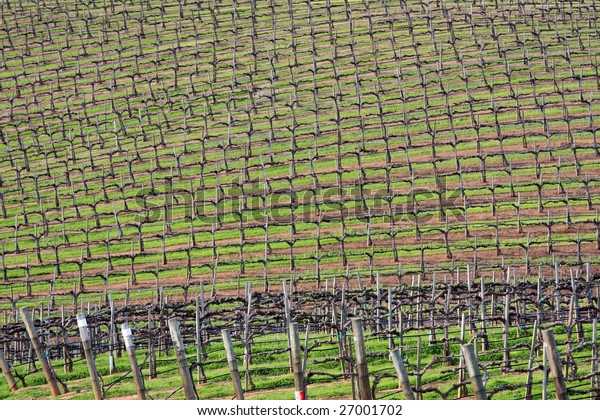 Typical California Vineyard in the spring, before the vines start growing.