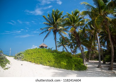 Typical carribean beach with white sand and palms