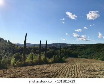 Typical country road in Tuscany, Italy lined with cypress trees along the fields