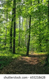 typical czech green forest in the spring