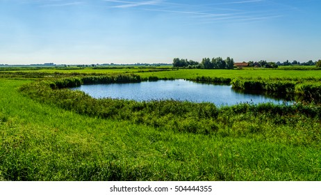 Typical Dutch flat landscape with meadows and a pond near the town of Nijkerk in the province of Gelderland in the Netherlands