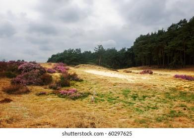 Typical dutch heathland (with typical dutch weather)