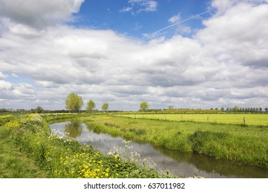 Typical dutch landscape in the Betuwe, near the river Linge, on a beautiful day in the Netherlands with river, meadows and cloudy sky and primroses