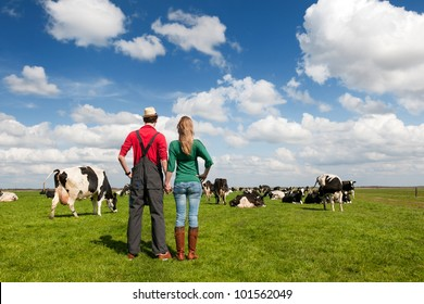 Typical Dutch landscape with farmers and black and white cows in the meadows