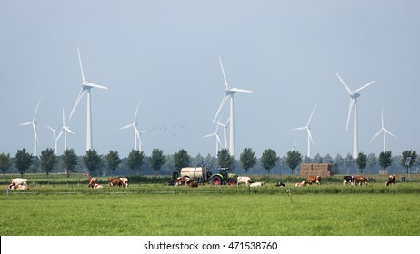 Typical Dutch landscape: a farmland with windmills, cows.on the backside the Westermeerwind wind farm.Urk Netherlands 20 August 2016