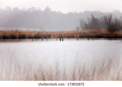 Typical dutch landscape of a wetland