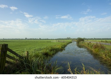 Typical Dutch landscape with wooden fence and ditch with reed, bushes and trees on horizon, blue sky with clouds. Image by Sonja Riedijk.