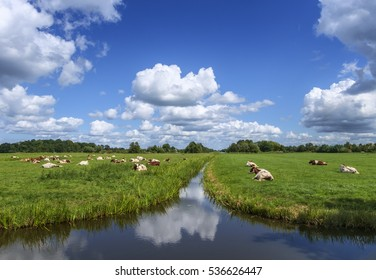 Typical Dutch polder landscape, with low lying grassland, ditches filled with water, grazing cows and low horizon with big clouds