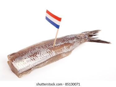 Typical Dutch salted herring called maatje or zoute haring