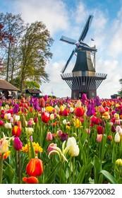 Typical Dutch scene of windmill with tulip flowers, Keukenhof, Holland, Netherlands