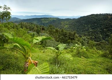 Typical environment for rare ecuadorian antpittas. Mountains covered in tropical rainforest. Refugio Paz, Mindo area, Ecuador.