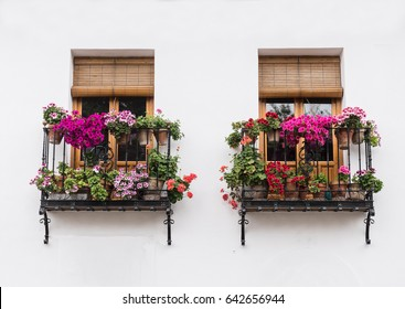 Typical European Window on Building with Balcony and Flowers