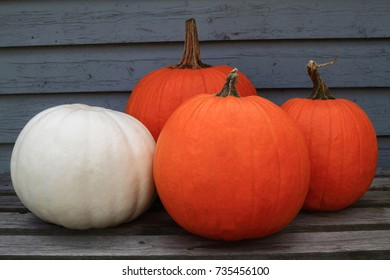 Typical for the Fall, Autumn season and Thanksgiving and Harvest celebration, four big orange and white pumpkins. Picture can be used as background