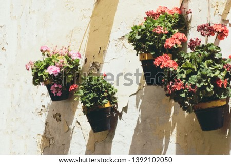 Typical flower pots on the wall of a Spanish city Andalusia Spain & Typical Flower Pots On Wall Spanish Stock Photo (Edit Now ...