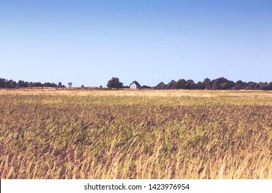 typical Hiddensee heath landscape with white cottage