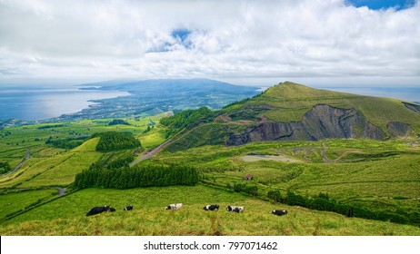 Typical hilly terrain on Sao Miguel island of Azores, Portugal, fully covered by greenery and some agricultural areas, with grazing cows in a meadow on foreground.
