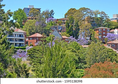 Typical historical Australian building with flowering jacaranda tree at the foreground - Shutterstock ID 1595138398