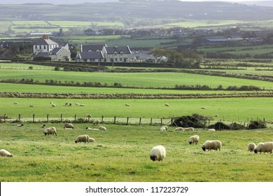 Typical Irish rural landscape: sheep, traditional houses, grasslands, forests and rolling hills.