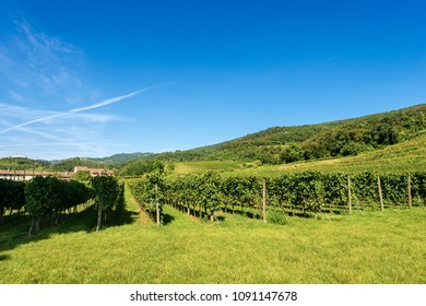 Typical Italian red grape vineyards at the base of the hill with blue sky. Valpolicella Wine - Verona, Italy, Europe