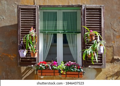 Typical italian window with flowers in a house of Rome (Italy)