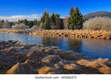 Typical landscape around Vltava river, Sumava national park in Czech Republic. Green forest with river meander. Peat bog place with spruce forest during winter.
