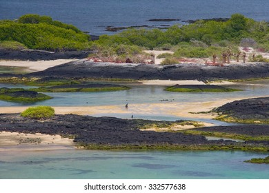 Typical landscape of the Galapagos Islands. An excellent illustration.