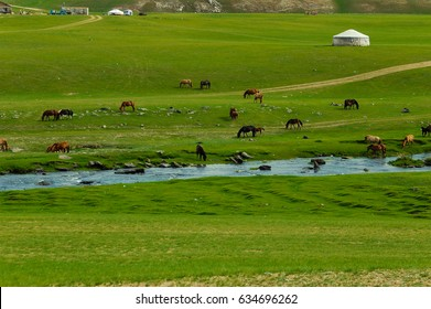 Typical mongolian landscape and steppe with horses and yurt