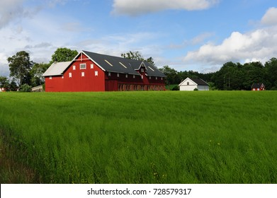 A typical Norwegian farmhouse in a very lush green field of grass.