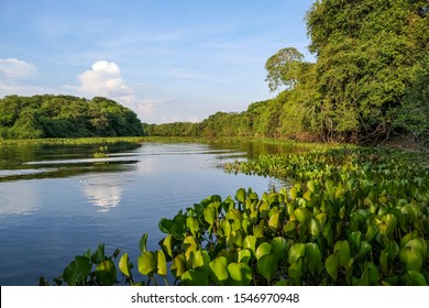 Typical Pantanal river scenery in afternoon light,  sky reflected on water, Pantanal Wetlands, Mato Grosso, Brazil