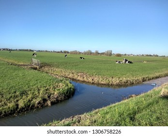 Typical Polder landscape with cows in Nieuwkoop The Netherlands with asphalt road ditch dyke and blue sky in winter and autumn