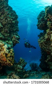 typical Red Sea tropical reef with hard and soft coral surrounded by school of orange anthias and a underwater photographer diver