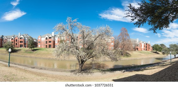 Typical riverside apartment building complex at springtime in Irving, Texas, USA. Cloud blue sky and blooming tree. Panorama view.