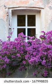 Typical Saint Tropez window with flowers in winter season