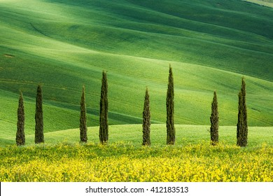 Typical shapes of cypress trees in Tuscany, Italy